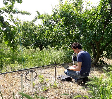 Maintenance monitor prune