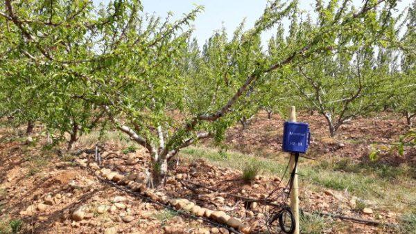 watermark_arboriculture