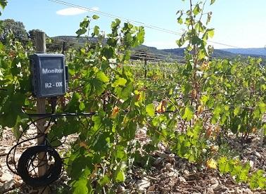 monitor sur plantier de vigne