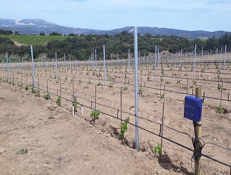 installation monitor sur plantier de vigne
