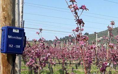 Le Monitor, un outil d'aide à la décision en irrigation