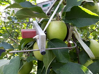 Capteur fruit du pepista